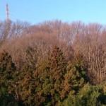 3月10日杉の木