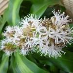 幸福の木の花 (2)